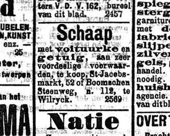 Handelsblad 1908-05-23 schaap