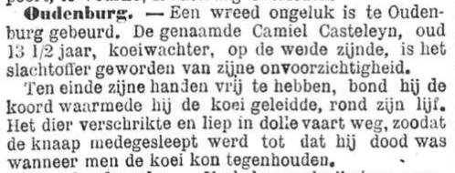 Het Nieuws Van Den Dag,  7 november 1894 Dolle koe