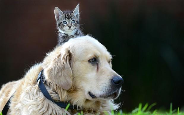 potd-dog-cat_2532040b